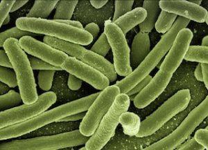 koli-bacteria-123081_320