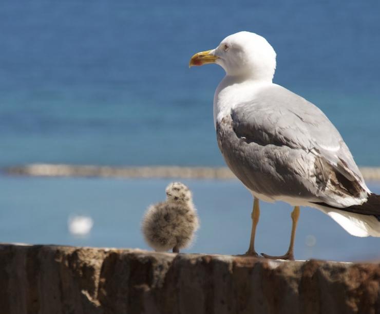 産後うつに悩む鳥