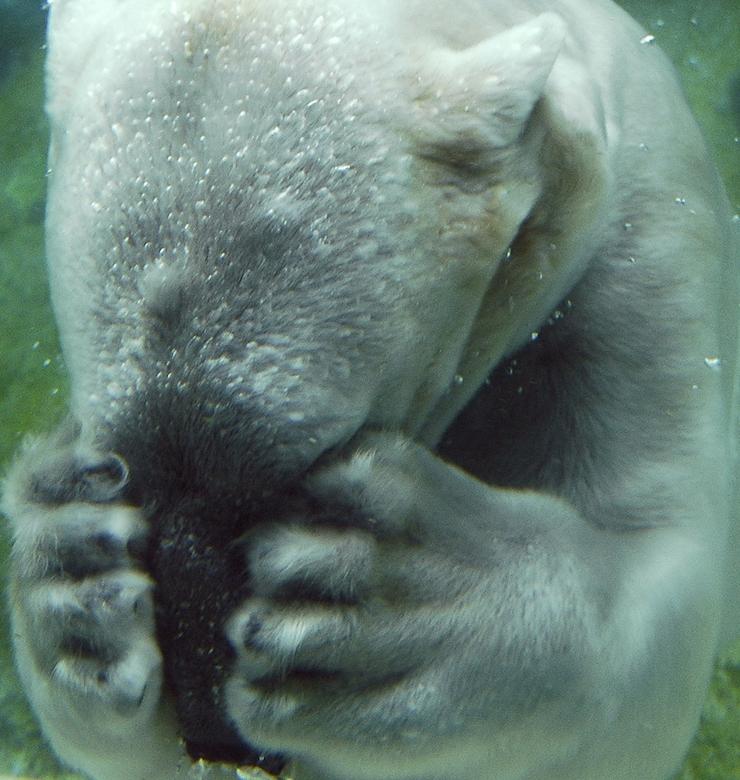 パニック障害を引き起こしいるような熊
